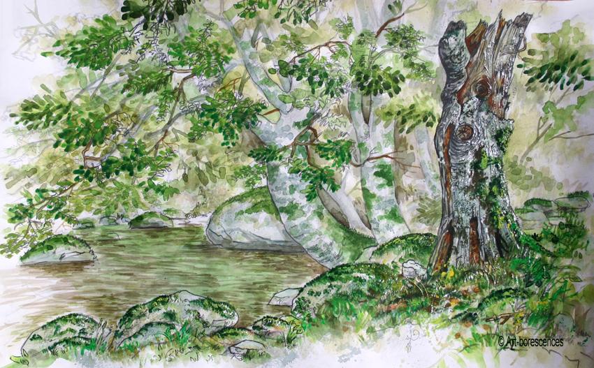 art-borescences_1408_ (8)_aquarelle_nature